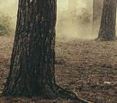Ellie Goulding/Videography