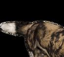 African Wild Dog (Sim'Z)