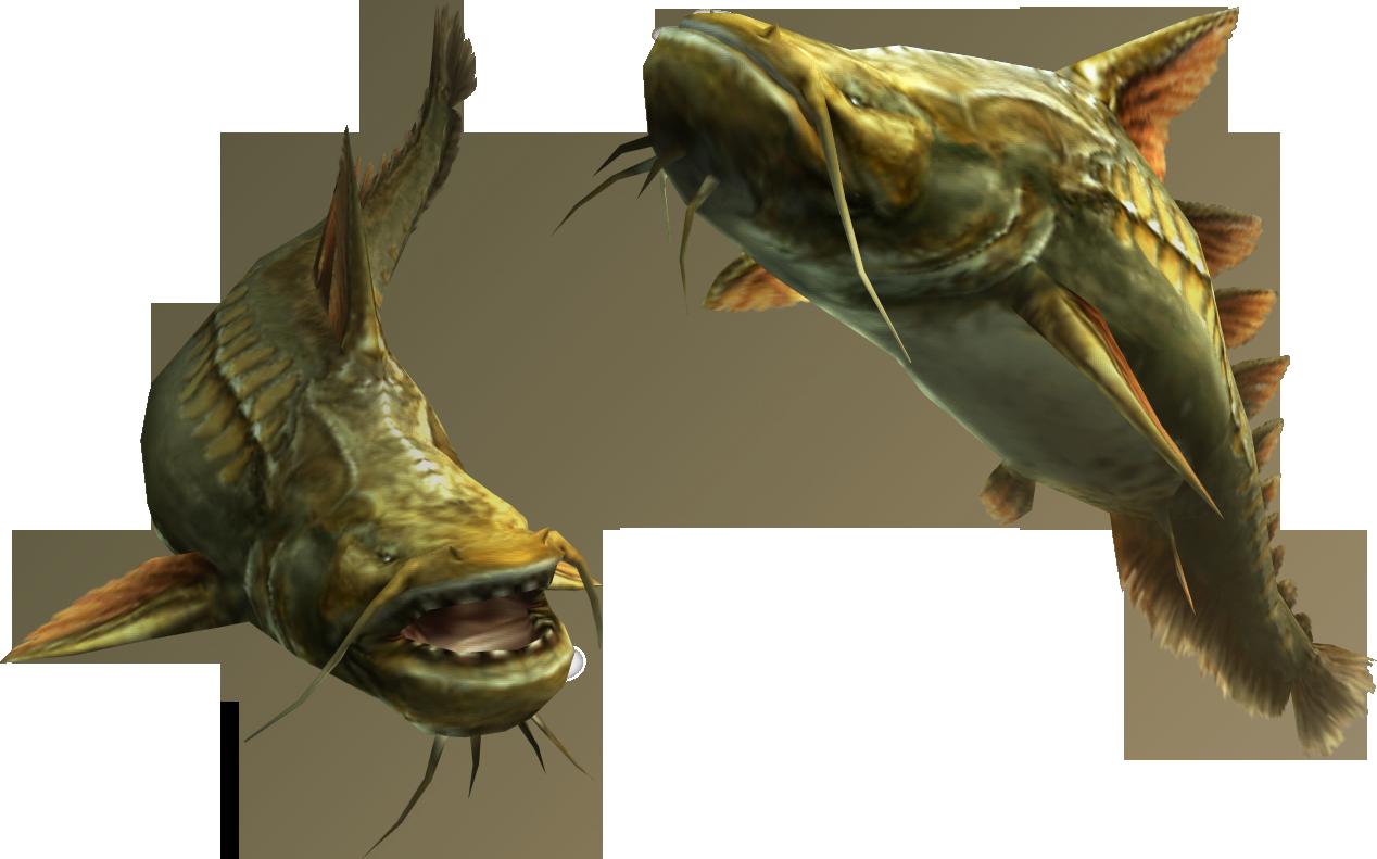 Fish the monster hunter wiki
