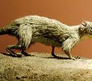 Млекопитающие триасового периода