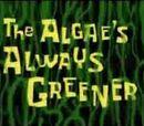 Las Algas Siempre son Verdes
