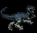 Novaraptor - skórka Blue Ivy