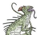 Yakith Lizard