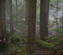 Forêt de Sherwood