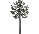 Monkey Puzzle Tree (Aurora Designs)
