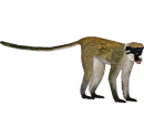 Lesser Spot-nosed Monkey (DutchDesigns)