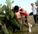Cactus fall