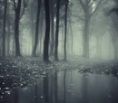 The Die Forest