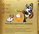 Red Hawkfish's Number One Fan!/Last Jezabel tomorrow!