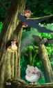 EP804 Pájaros Pokémon.png