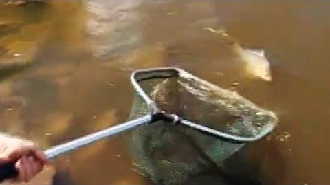 Про Риболовлю Всерйоз - Випуск 03 - Матчева ловля карася