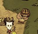 Cerdo/Normal