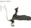 Ascialophoraptor