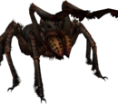 Giant Spiders
