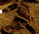 Not-Furya Skeleton