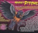 Hooded pithoui