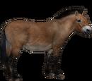 Przewalski's Wild Horse (Aurora Designs)