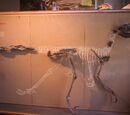Динозавры Кореи