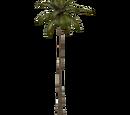 Coastal Palms (Zerosvalmont)