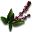 Tw3 holy basil.png