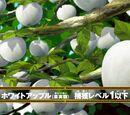 Białe Jabłko