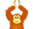 Orangutans avril l