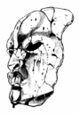 Chapter 2 Tailpiece.png