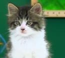 Max (Cat)