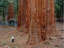 Riesenbaum 2.png