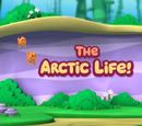 The Arctic Life