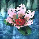 Fleur de nénuphar.jpg