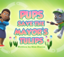 Pups Save the Mayor's Tulips' Pages