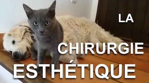 LA CHIRURGIE ESTHÉTIQUE - PAROLE DE CHAT