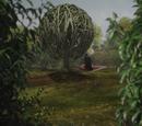 Tum Tum Tree