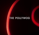 The Pollywog