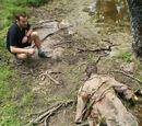 Un cadáver en la laguna