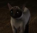 Kim Cat