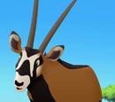 Male Oryx
