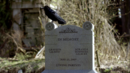 101-Crow~Grayson~Miranda-Tomb.png