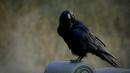 101-035~Elena-Crow.png
