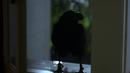 103-Crow.png
