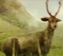 Unidentified deer