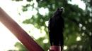105-Crow.png