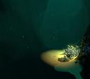 Deep Sparse Reef