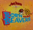 Born to be Beavers