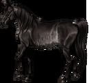 Arabian Mare Black Rabicano.png