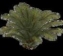 Ferns (Thom)