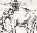 Hanno, der Elefant