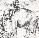 Elefant Hanno.jpg