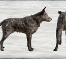 Животные Far Cry 5